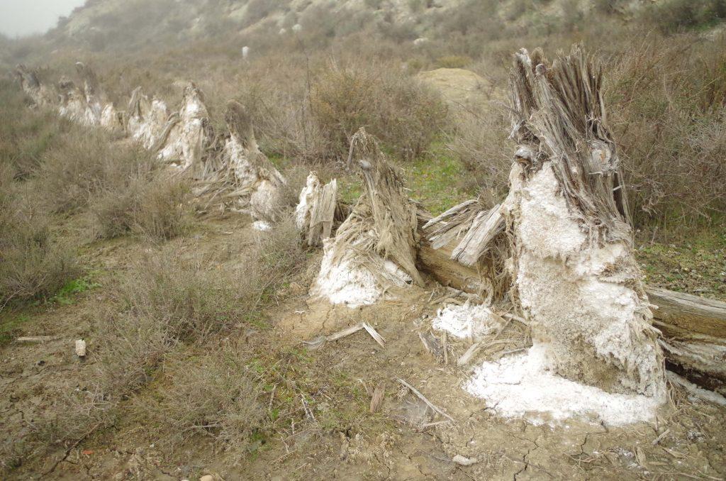 Formaciones salinas sobre los restos de madera en la balsa de evaporación